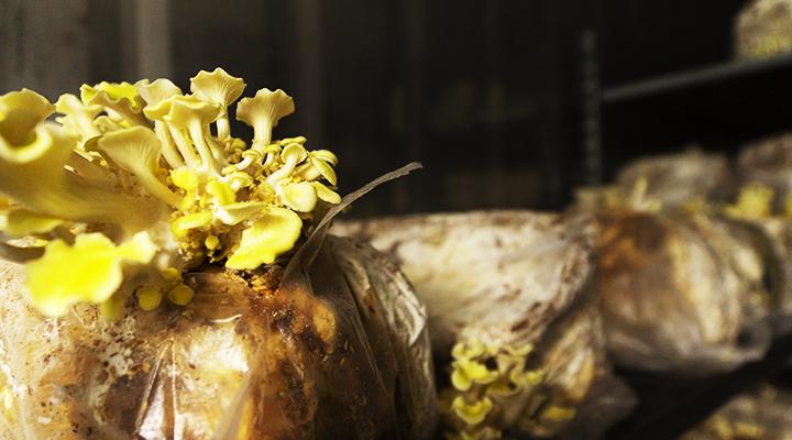 Horecava - Paddenstoelen de duurzame vleesvervangers