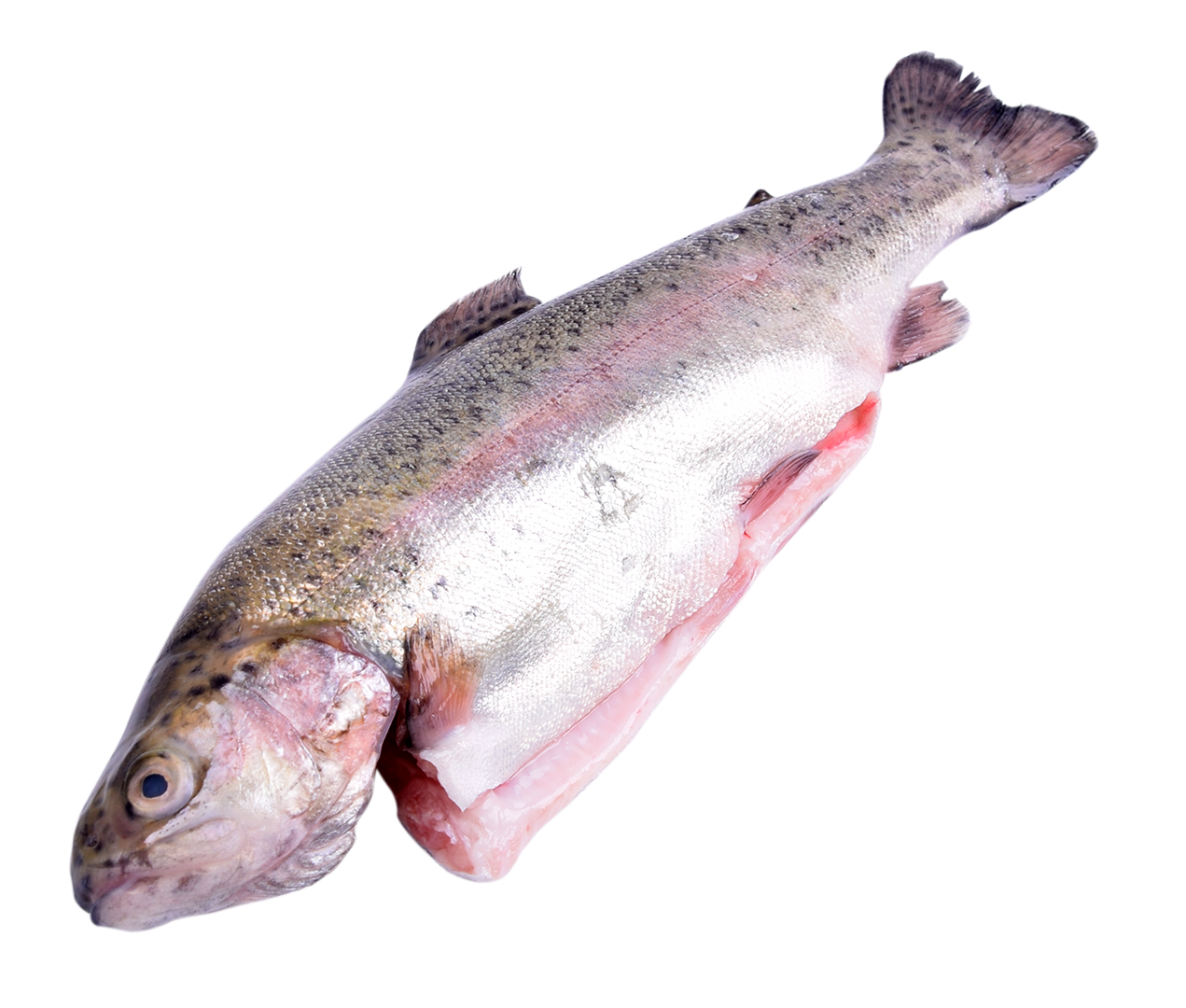 Productafbeelding FOREL VERS 200/240 GRAM 20-22