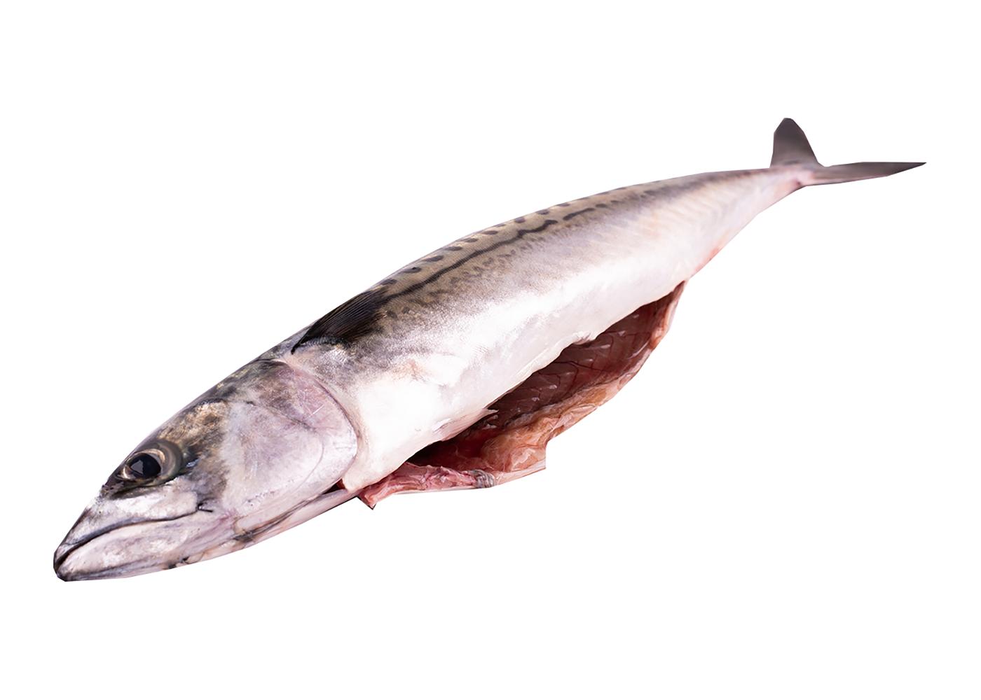 Productafbeelding Makreel gestript groot