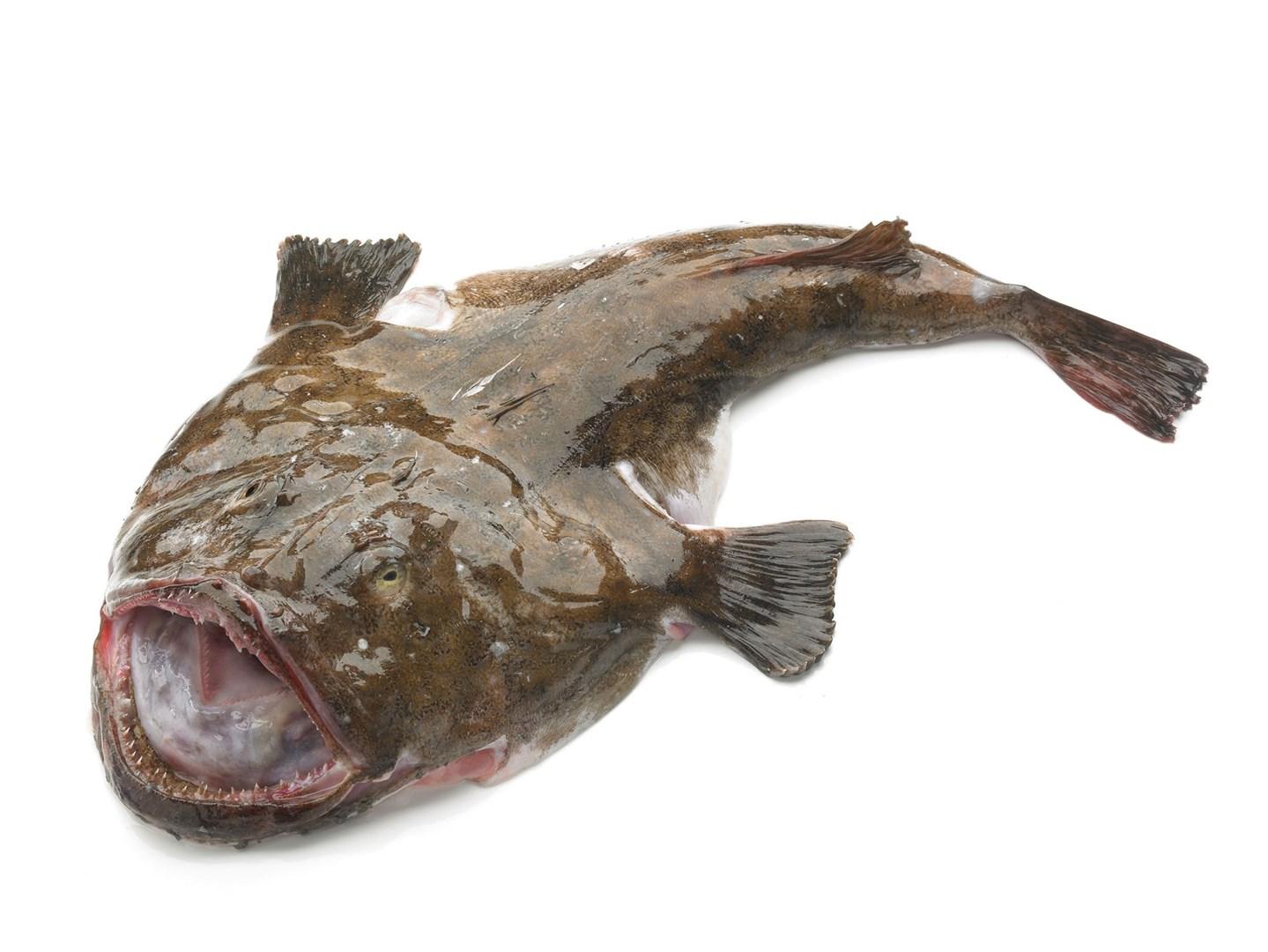 Productafbeelding Ham/zeeduivel tot 500 gram