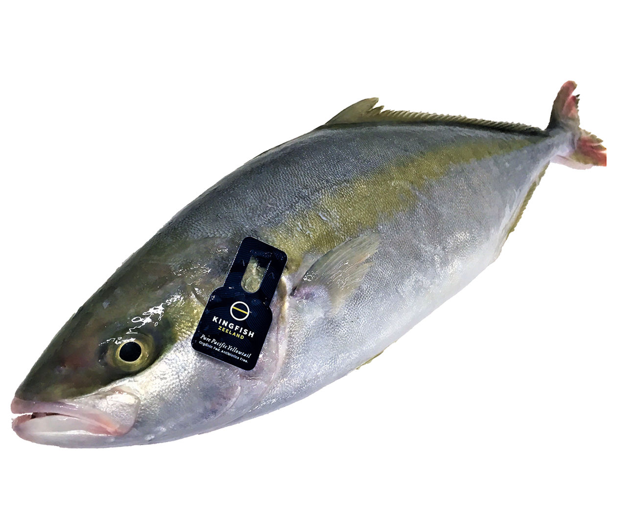 Productafbeelding YELLOWTAIL KINGFISH HOLLANDS 1-2 KG