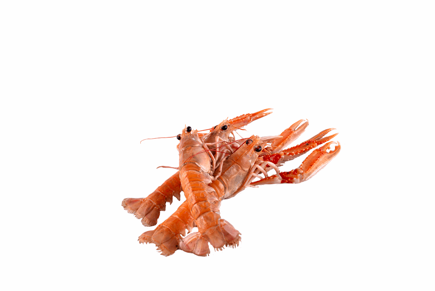 Productafbeelding LANGOUSTINES GROOT LEVEND
