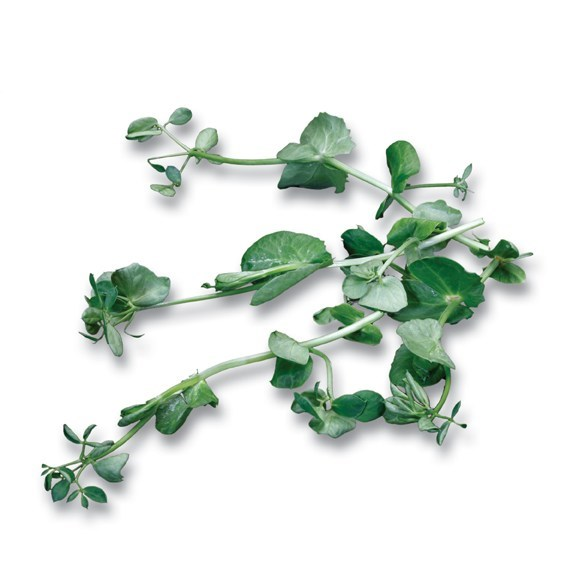 Productafbeelding Salad Pea