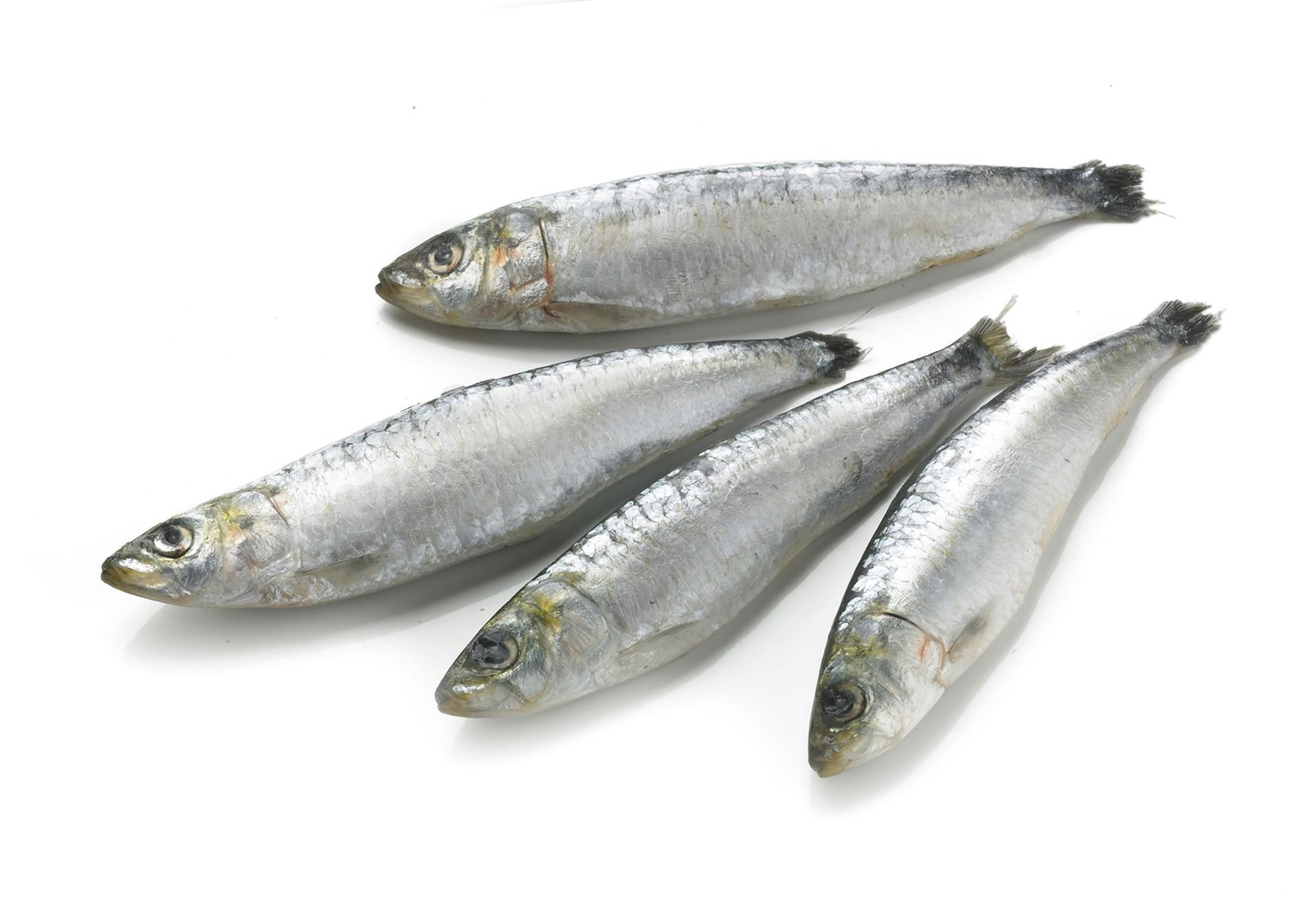 Productafbeelding Sardines Portugees DV