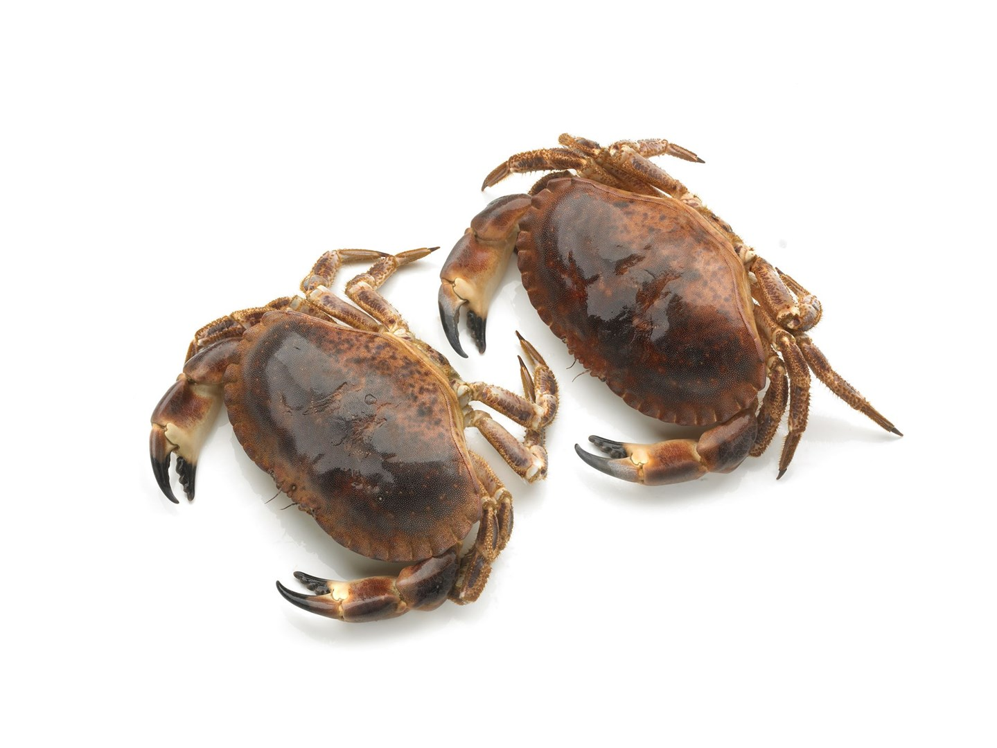 Productafbeelding Crab Tourteau