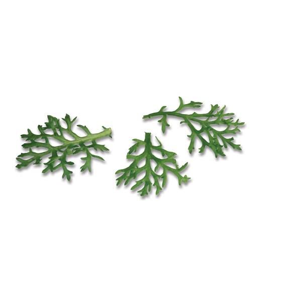Productafbeelding Kikuna® Leaves