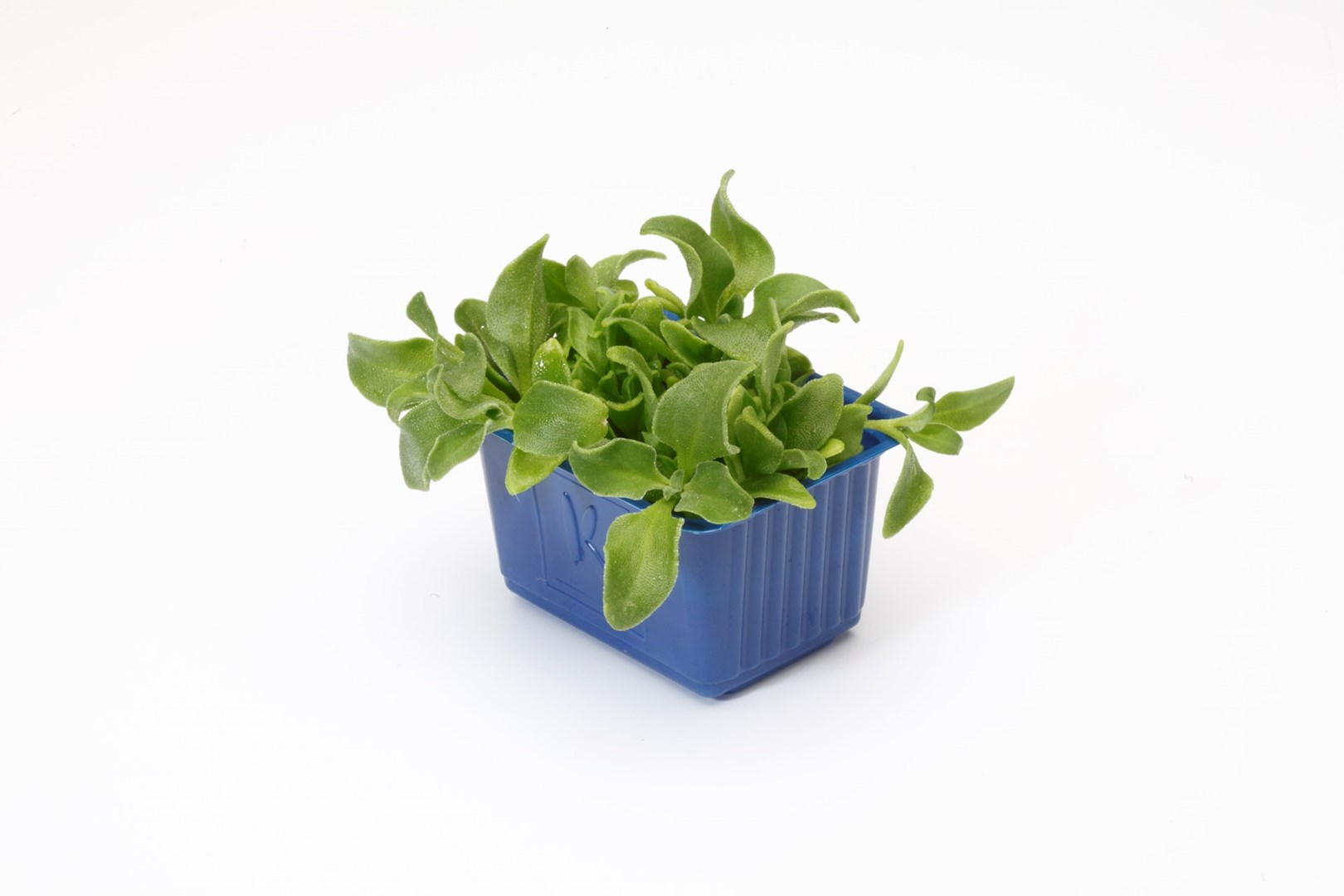 Productafbeelding BlinQ Cress (CressSingle)