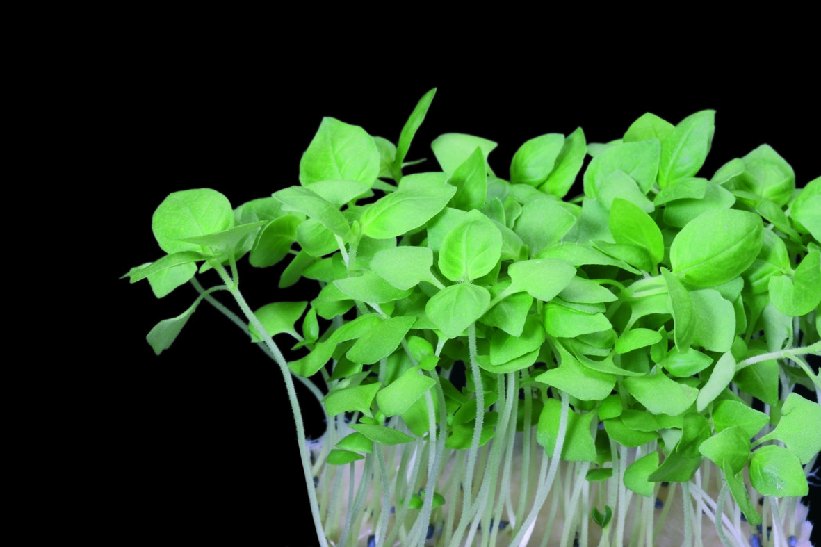 Productafbeelding Limon Cress (CressSingle)