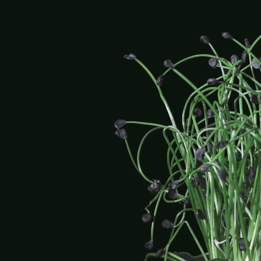 Productafbeelding Rock Chives® (CressSingle)