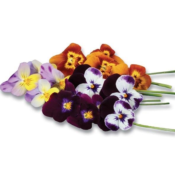 Productafbeelding Cornabria Blossom®