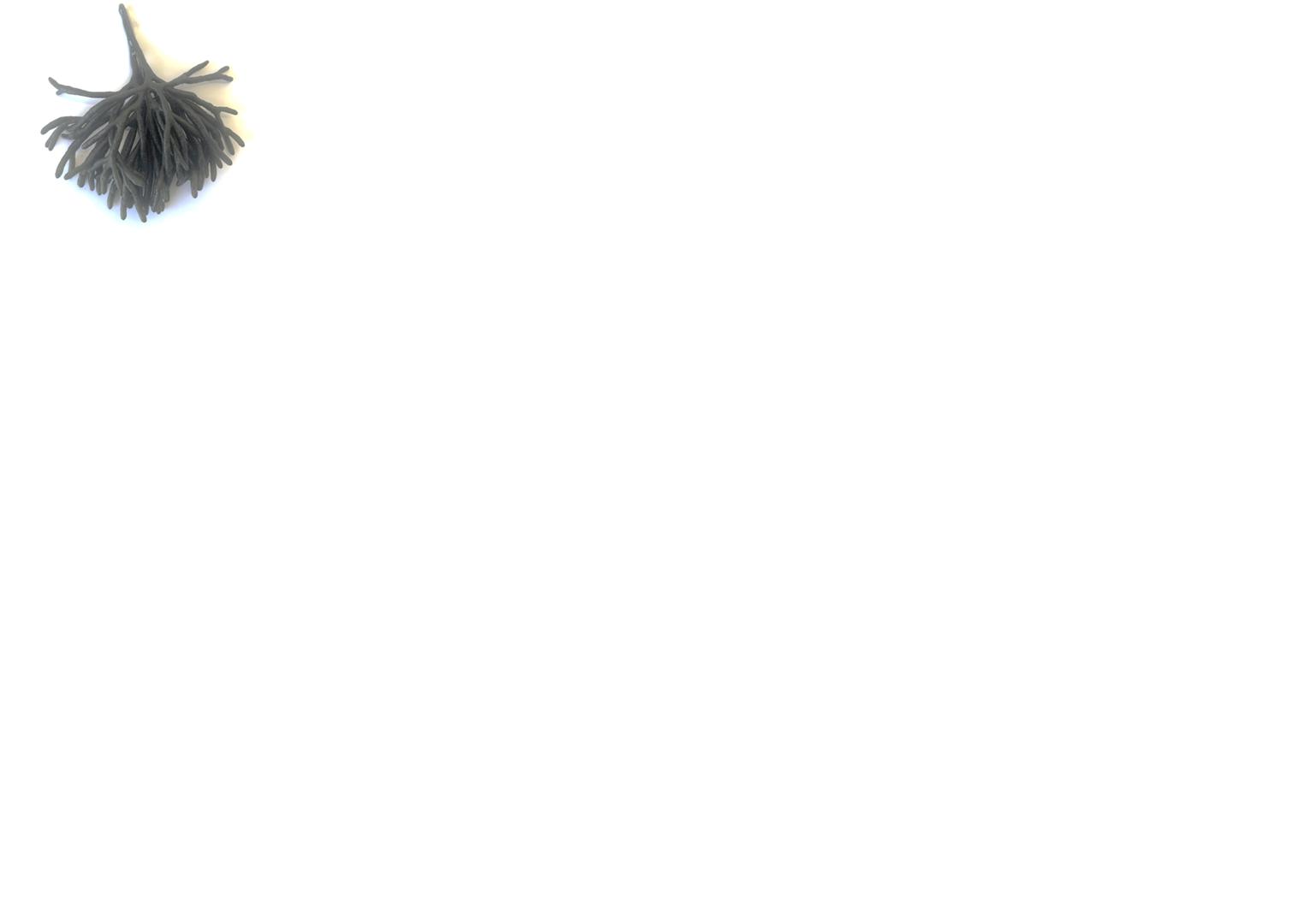 Productafbeelding CODIUM ZEEWIER (VILTWIER) 500 GRAM