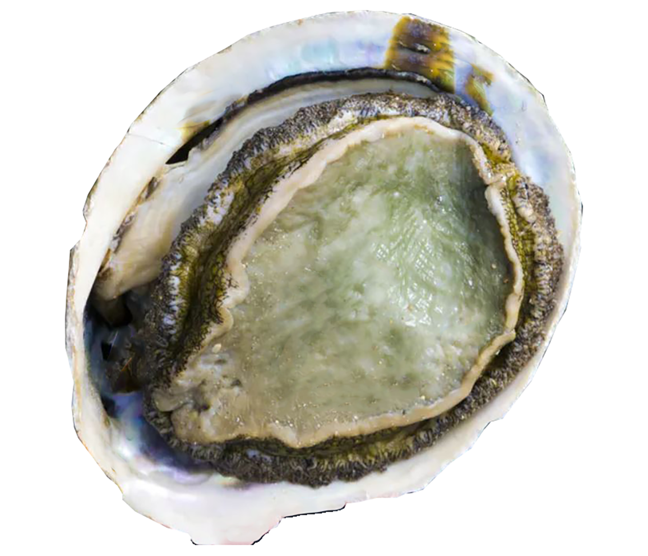 Productafbeelding ABALONES/ORMEAUX