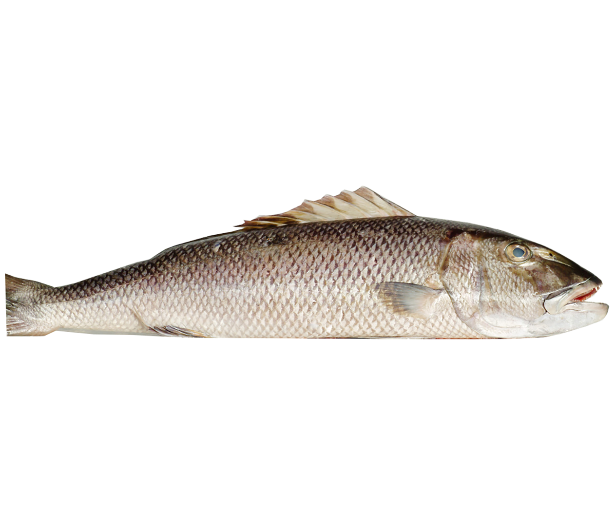 Productafbeelding JOB FISH