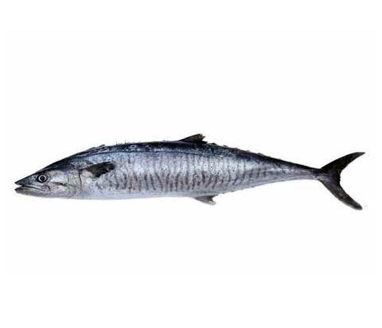 Productafbeelding KING FISH