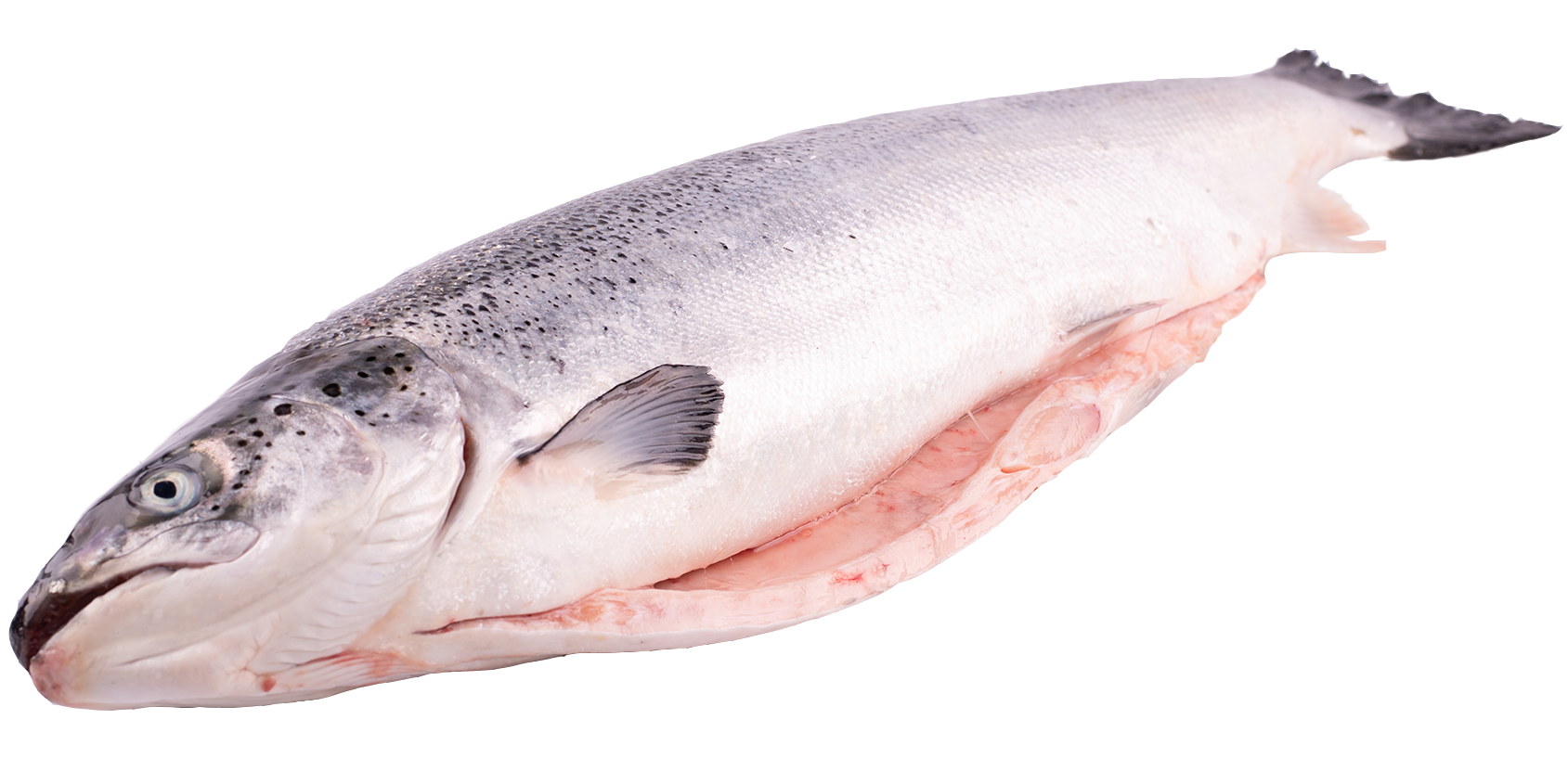 Productafbeelding ZALM NOORS 4-5KG DS 3 ST.