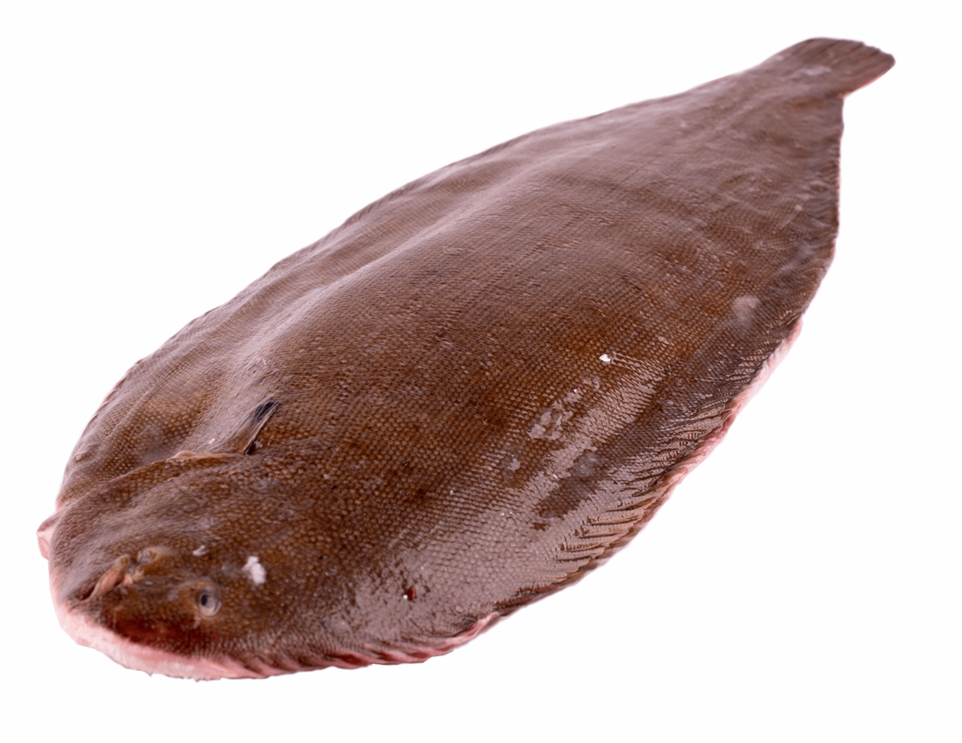 Productafbeelding DOVER SOLE 800 GRAM UP WHOLE, FROZEN