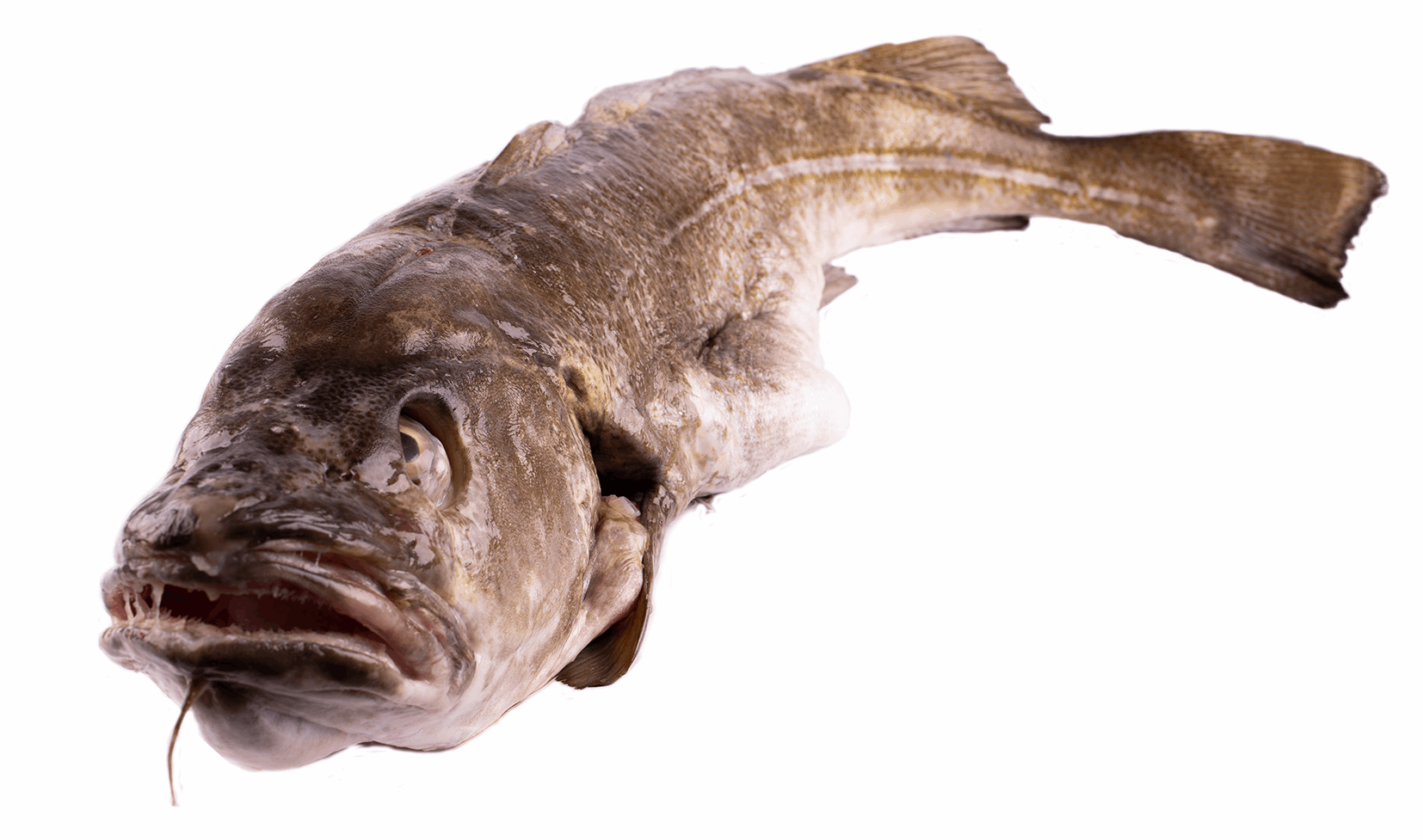 Productafbeelding COD WHOLE WITH HEAD, FRESH
