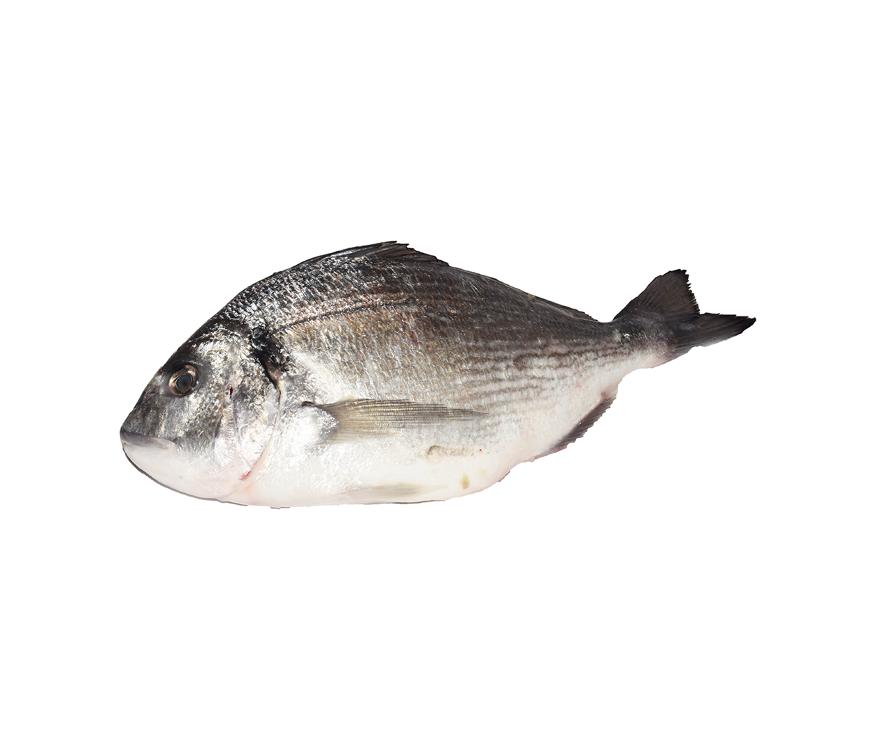 Productafbeelding WILD SEABREAM ROYAL 2KG UP, GUTTED AND SCALES OFF,FROZEN