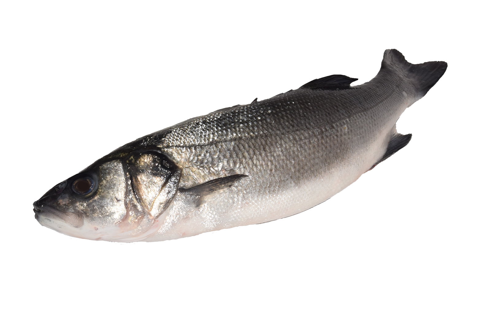 Productafbeelding SEABASS WHOLE FRESH,SIZE: 400-600 GR. SEABASS WHOLE FRESH,SIZE: 400-600 GR.