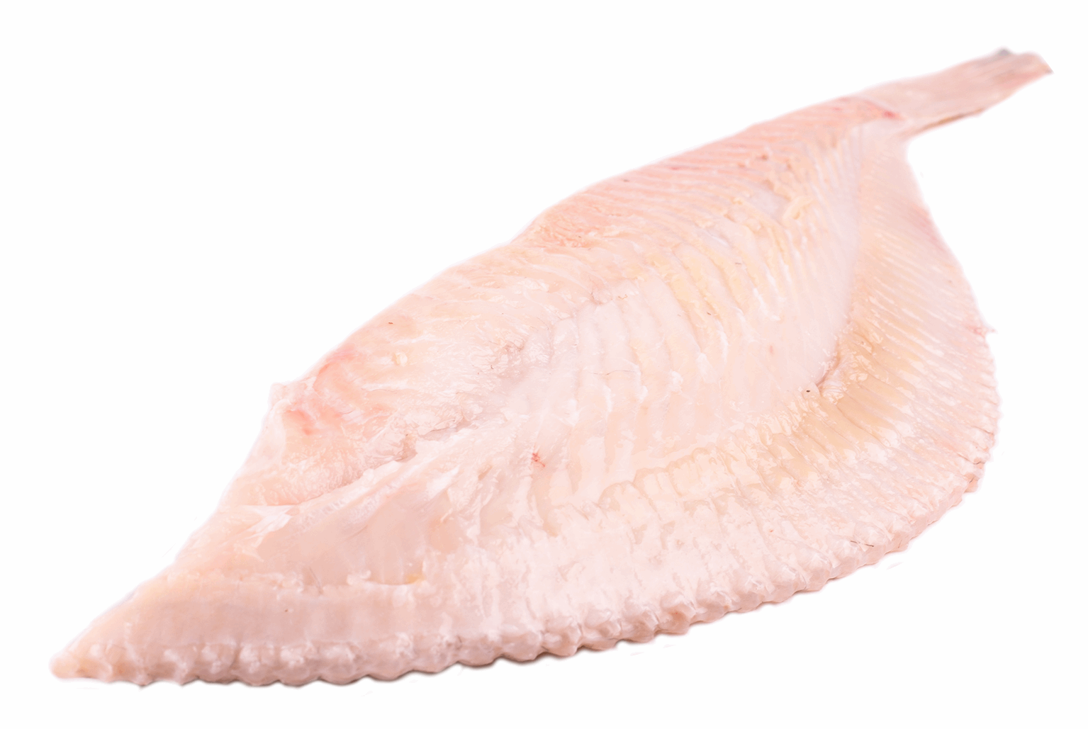 Productafbeelding TURBOT 3-4 KG. SPLITTED