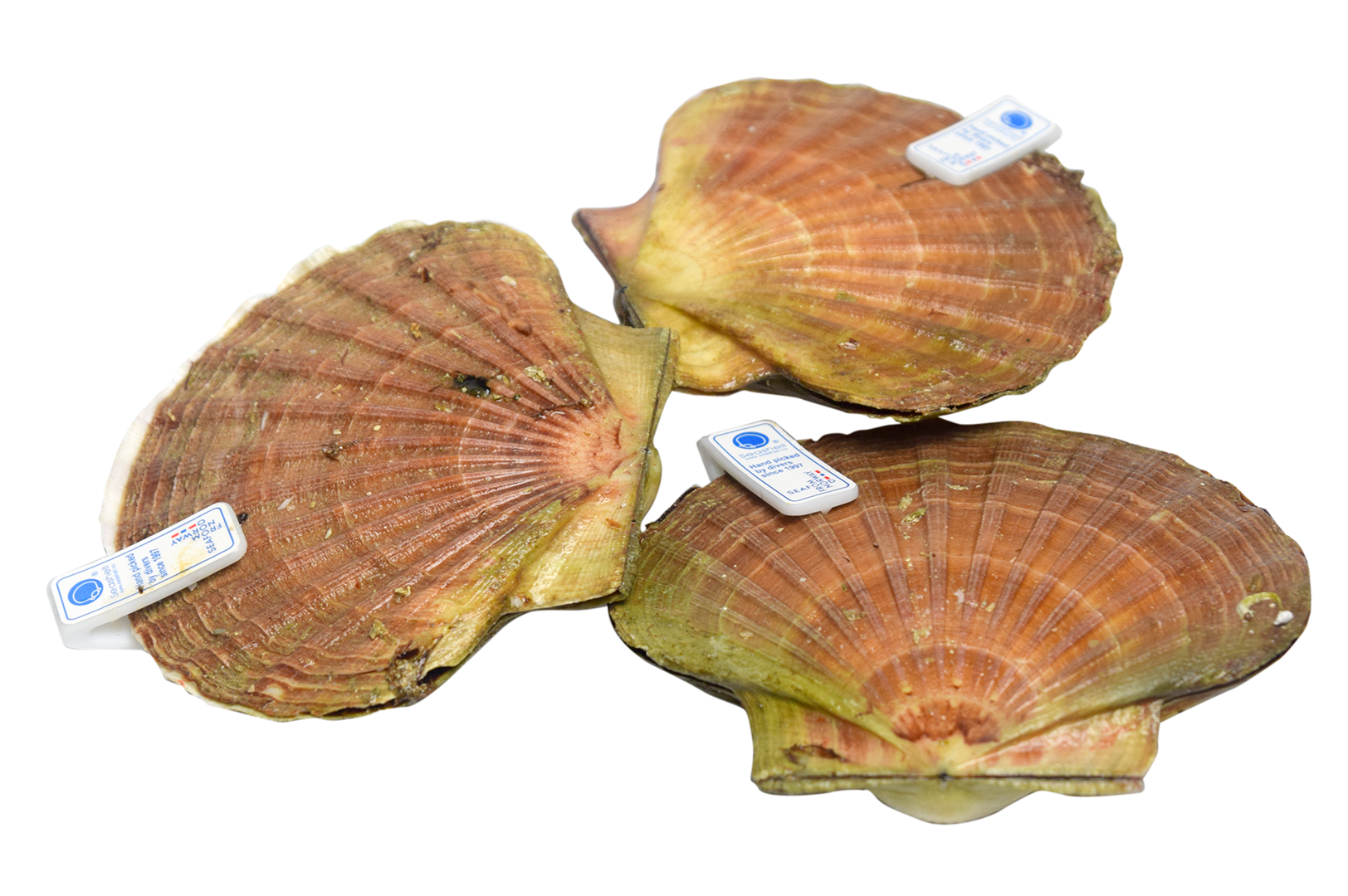 Productafbeelding Scallops In Shell Norwegian Handdived