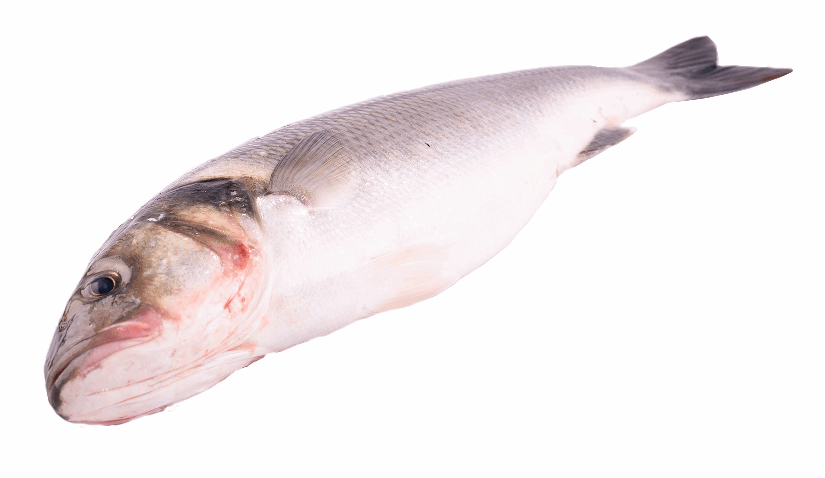 Productafbeelding SEABASS WILD WHOLE SIZE; 3KG UP