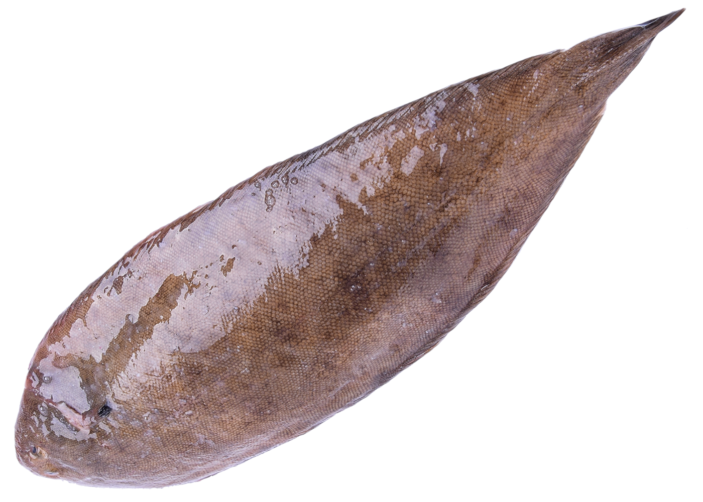 Productafbeelding DOVER SOLE WITH SKIN FRESH SIZE 100GR APPROX