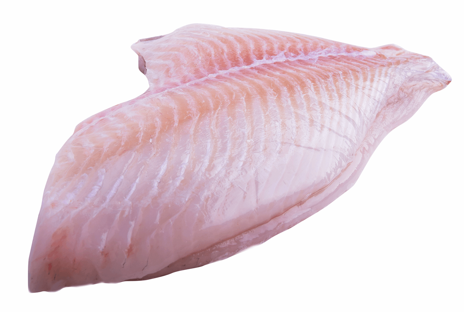 Productafbeelding TURBOTFILET SKINLESS NO FAT 2-3 KG