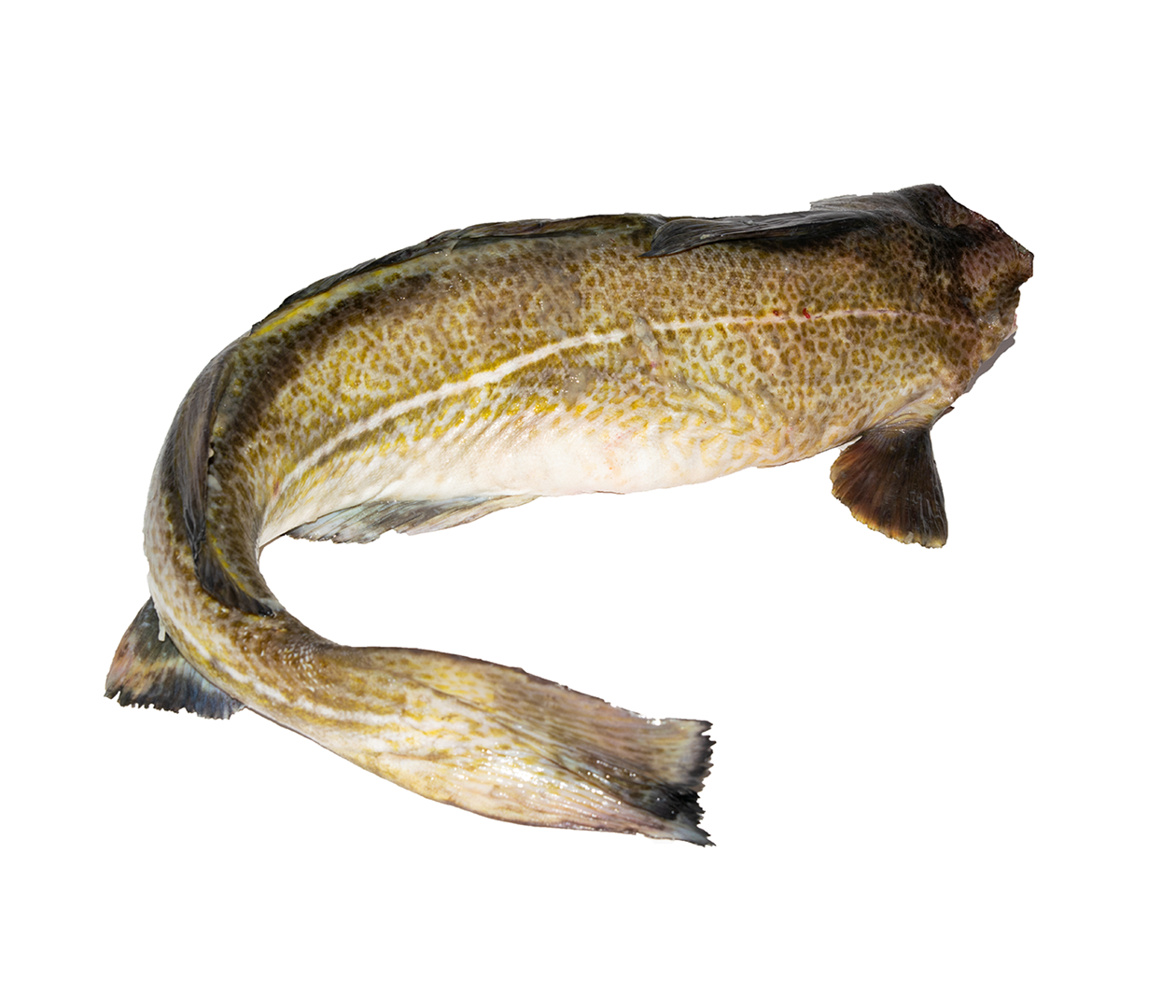 Productafbeelding COD WHOLE WITHOUT HEAD, FRESH