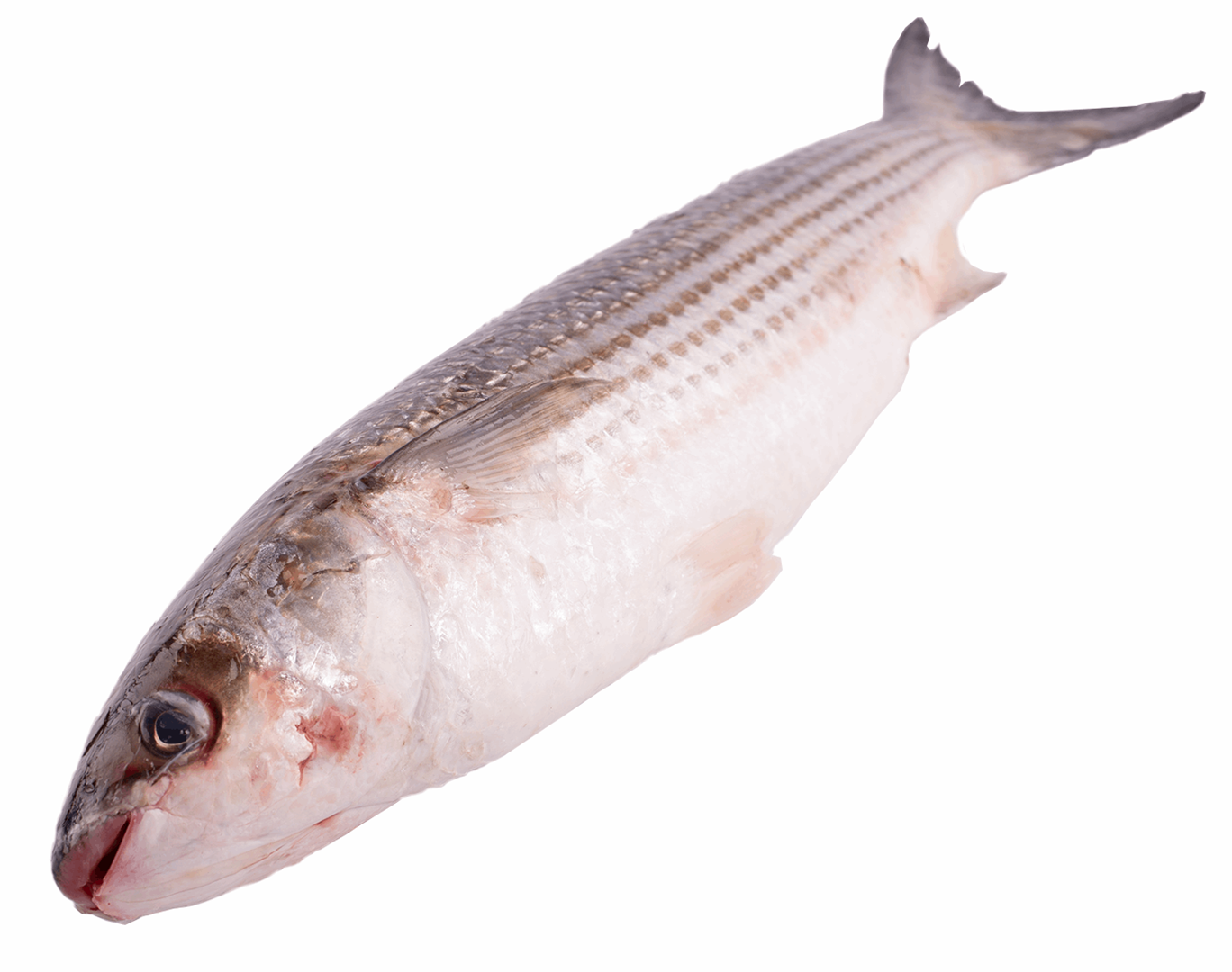 Productafbeelding GREY MULLET WHOLE