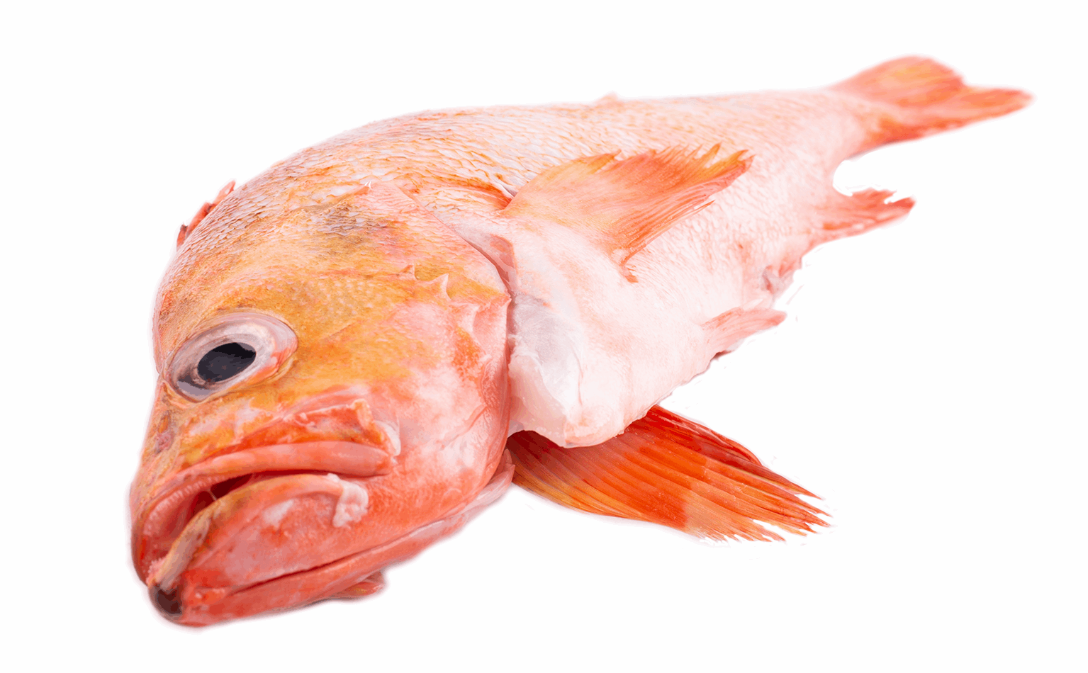 Productafbeelding REDFISH GUTTED SCALES OF
