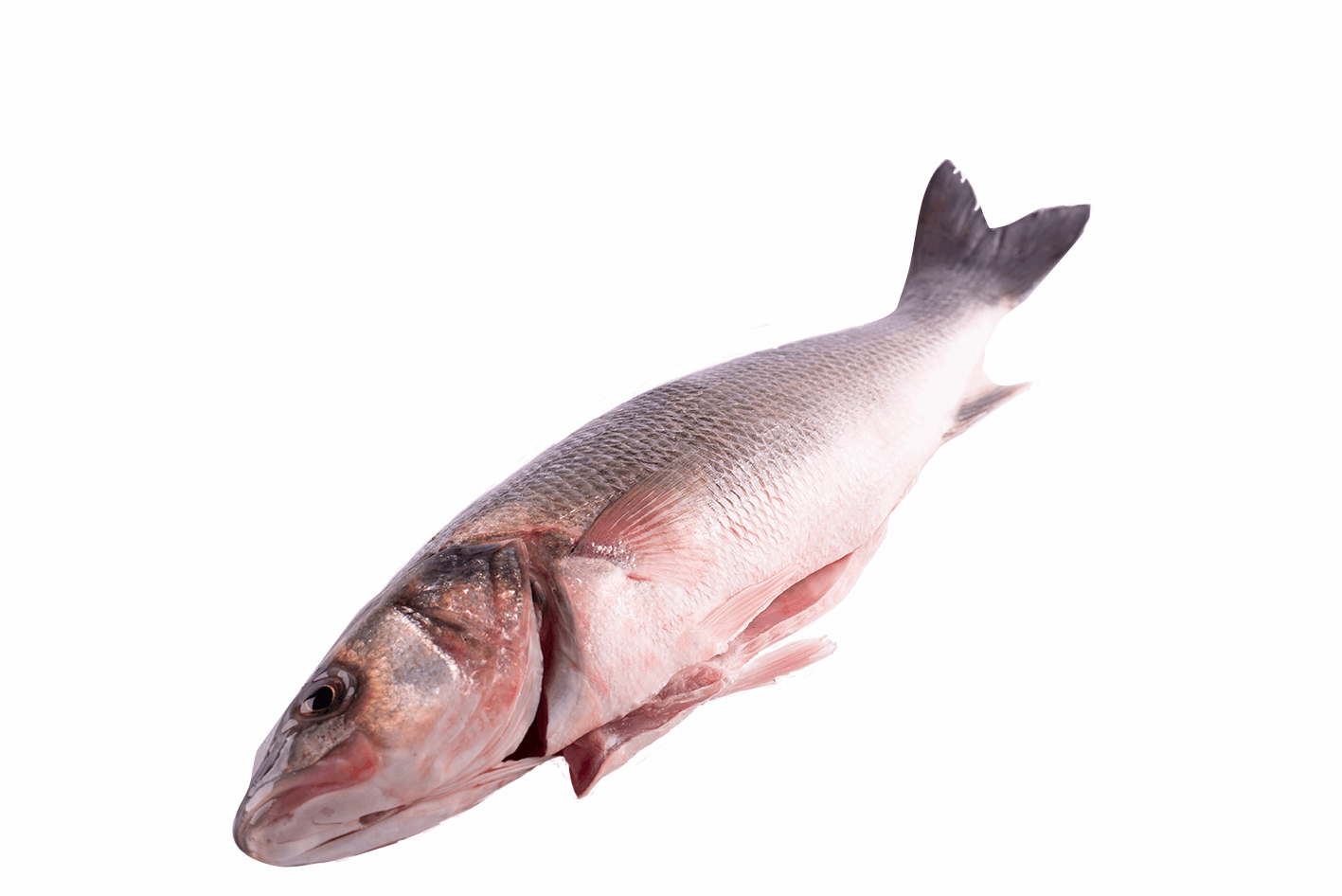 Productafbeelding SEABASS WILD WHOLE GUTTES SCALS OF 3 KG UP