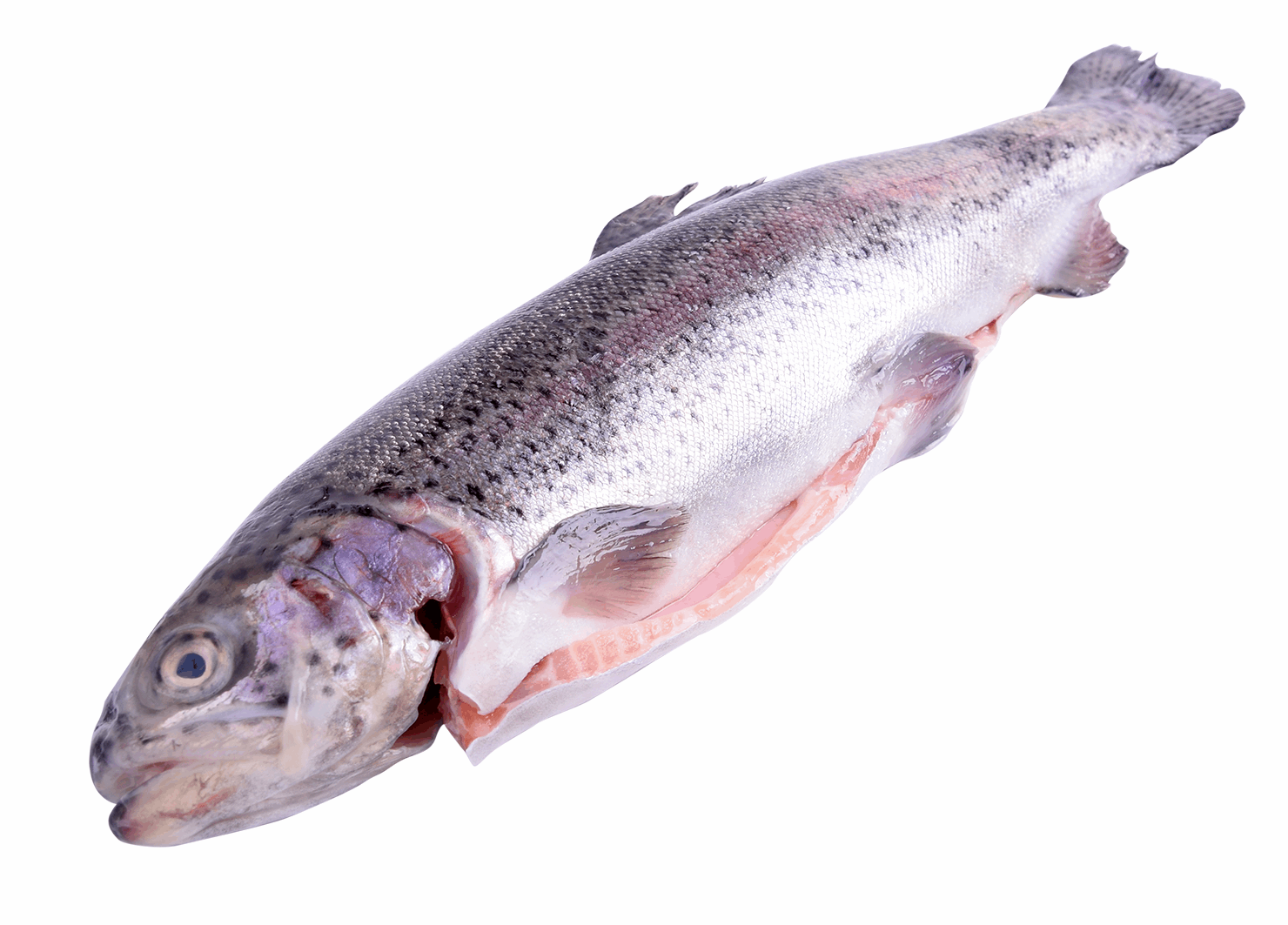 Productafbeelding SALMON TROUT WHOLE 300-400GR RAVNSTRUP